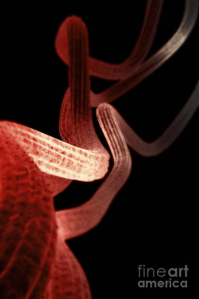 Photograph - Nerve Fibers by Science Picture Co