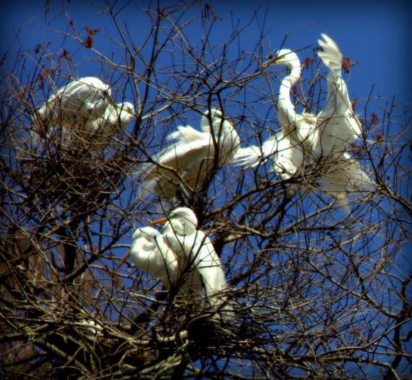 Photograph - Nest Builders by Karen Wiles