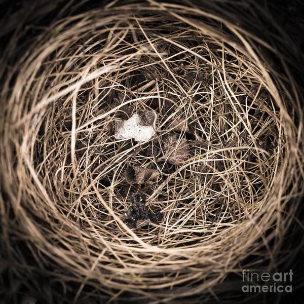 Birds Nest Photograph - Nest by Edward Fielding