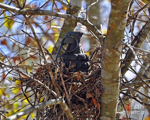 Wall Art - Photograph - Nest Frag by Al Powell Photography USA