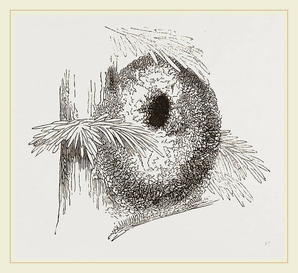 Titmouse Drawing - Nest Of Long-tailed Titmouse by Litz Collection