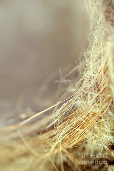 Wall Art - Photograph - Nest by Trish Mistric