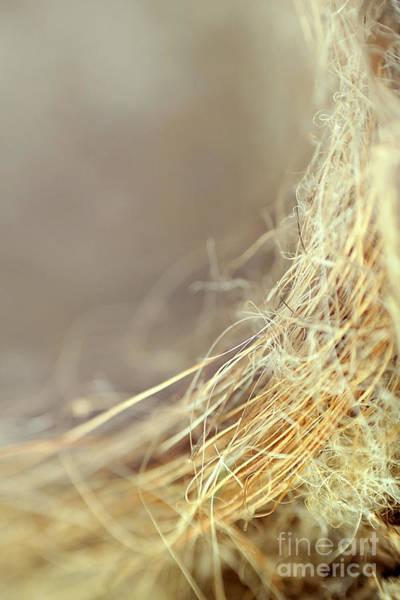 Empty Nest Wall Art - Photograph - Nest by Trish Mistric