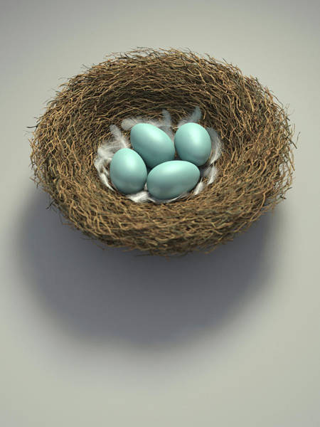 Wall Art - Photograph - Nest With Four Blue Eggs by Ikon Images