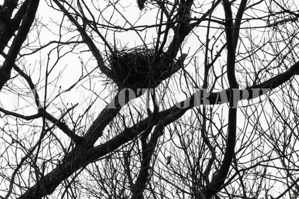 Empty Nest Wall Art - Photograph - Nesting by Caralee White