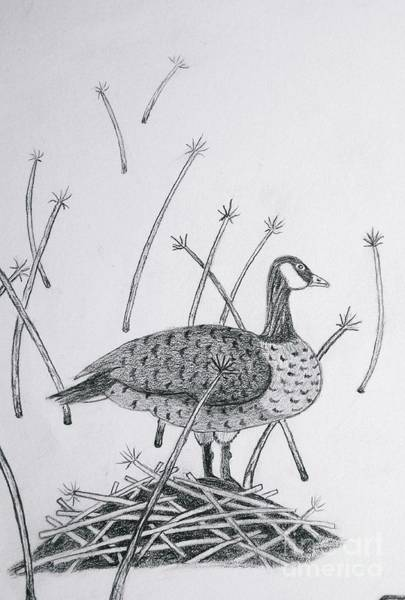 Duck Hunting Drawing - Nesting Goose Detail From Canadian Greetings by Gerald Strine