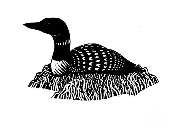 Nesting Loon Art Print
