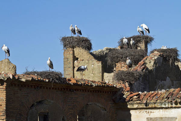 Faunal Photograph - Nesting Stork Colony by Heiko Koehrer-Wagner