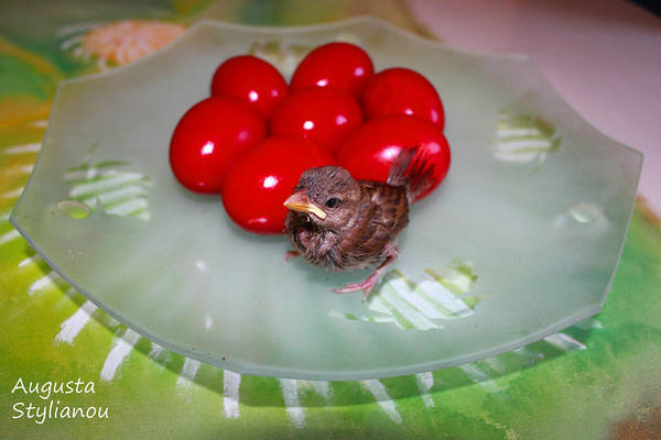 Photograph - Nestling And Red Eggs by Augusta Stylianou