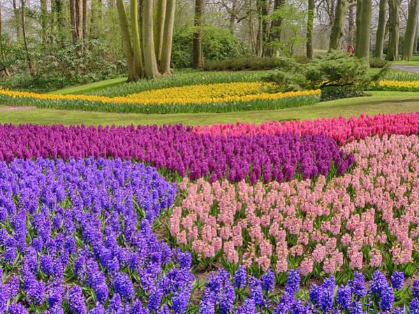 Keukenhof Wall Art - Photograph - Netherlands, Flower Displays by Terry Eggers