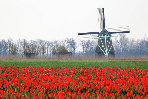 Dutch Tulip Photograph - Netherlands, Old Wooden Windmill by Hollice Looney