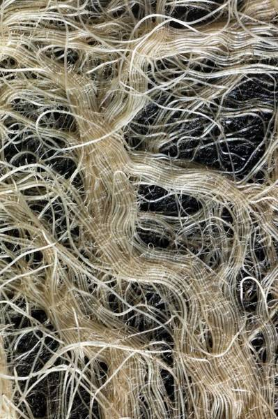 Wall Art - Photograph - Network Of Grass Roots by Dr Jeremy Burgess/science Photo Library