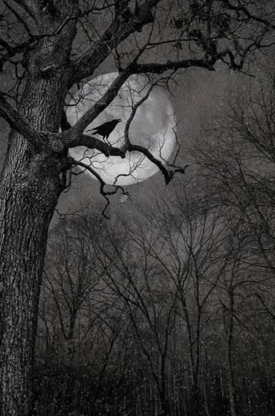 Photograph - Nevermore by Robin-Lee Vieira