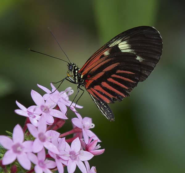Photograph - Nectar Collector by Sean Allen