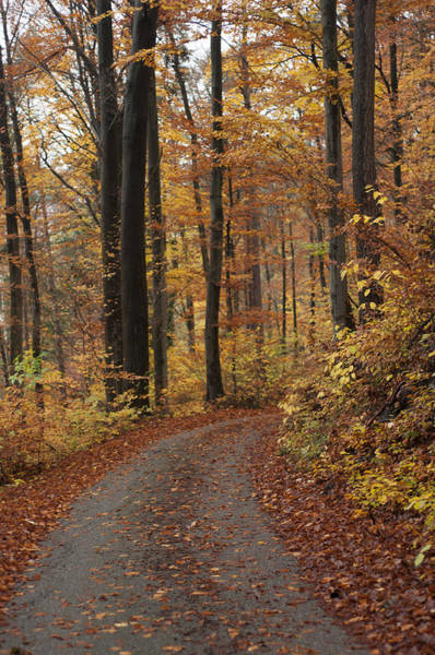 New Autumn Trails Art Print