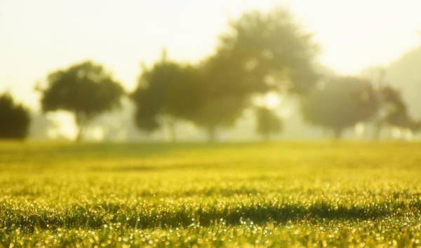Brillante Photograph - New Day From The Grass by HQ Photo