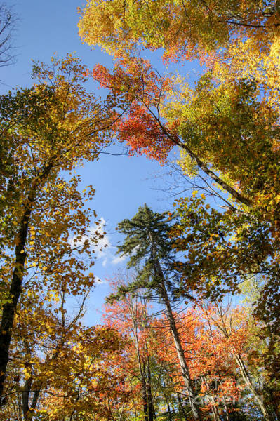 Photograph - New England Fall Color by David Birchall