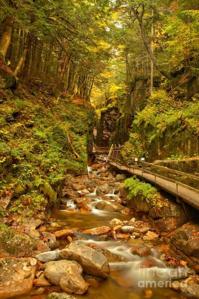 Franconia Notch State Park Photograph - New England Waterfall Gorge by Adam Jewell
