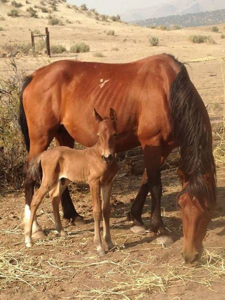 Photograph - New Foal by Wynema Ranch