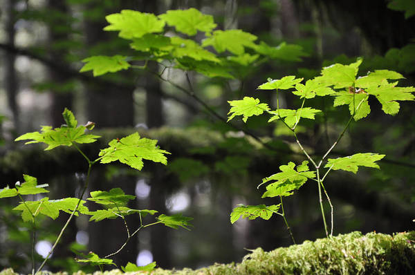 Photograph - New Growth by Kirt Tisdale
