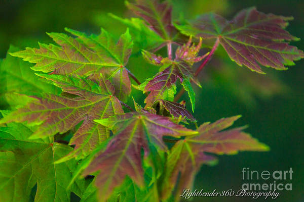 Photograph - New Growth by Larry McMahon