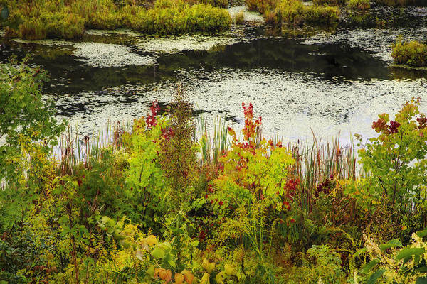 Photograph - New Hampshire Marsh by Tom Singleton