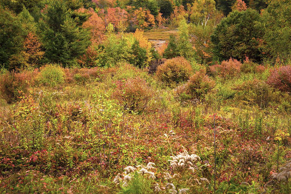 Photograph - New Hampshire Meadow by Tom Singleton