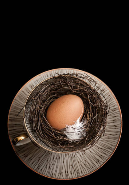 Birds Eggs Photograph - New Home by Maggie Terlecki