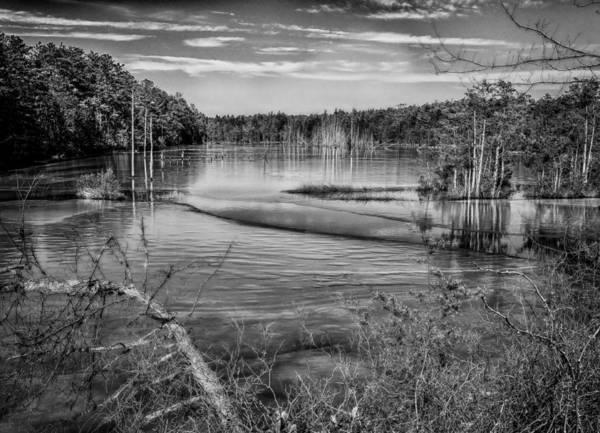 Photograph - New Jersey Pinelands by Louis Dallara