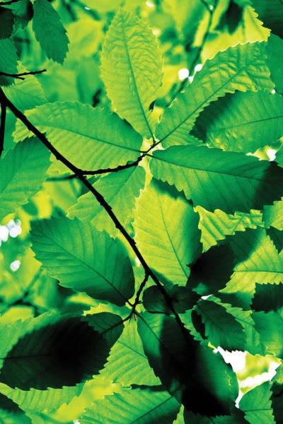 Digital Art - New Leaves by David Davies