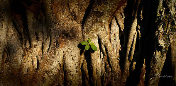 Photograph - New Life by William Arenas