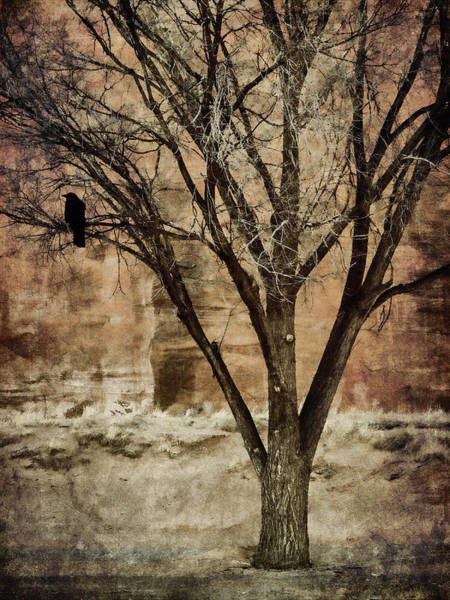 Wall Art - Photograph - New Mexico Winter by Carol Leigh
