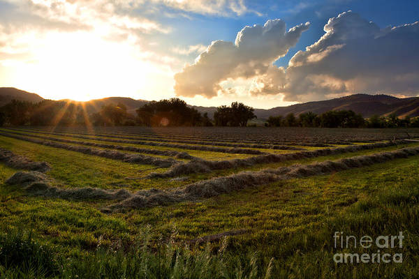 Photograph - New Mown Hay by Jim Garrison