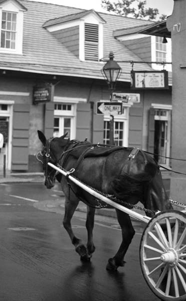 Photograph - New Orleans - Bourbon Street Horse 2 by Frank Romeo