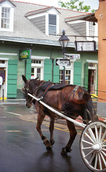 Photograph - New Orleans - Bourbon Street Horse by Frank Romeo