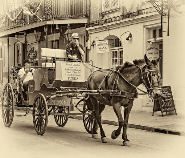Steve Harrington Wall Art - Photograph - New Orleans - Carriage Ride Sepia by Steve Harrington