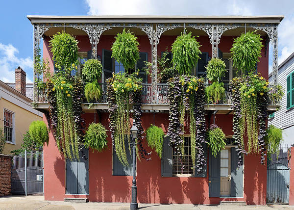 Photograph - New Orleans City Jungle by Christine Till