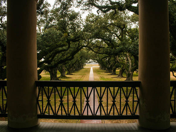 Photograph - New Orleans Live Oak by Karen Zuk Rosenblatt