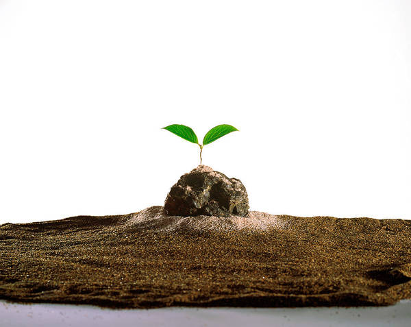 Compose Wall Art - Photograph - New Plant Growing On Sand Against White by Panoramic Images