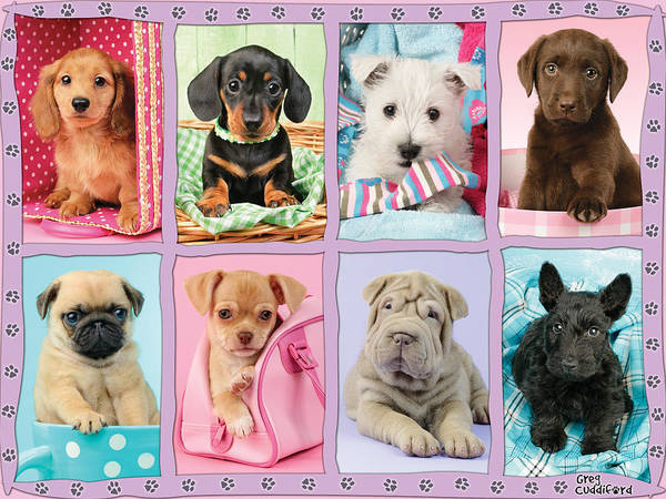Puppies Photograph - New Puppy Multipic by MGL Meiklejohn Graphics Licensing