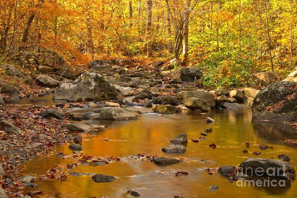 Photograph - New River Gorge Stream by Adam Jewell