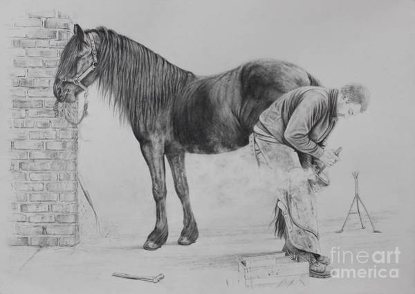 Friesian Drawing - New Shoes by Caroline Collinson