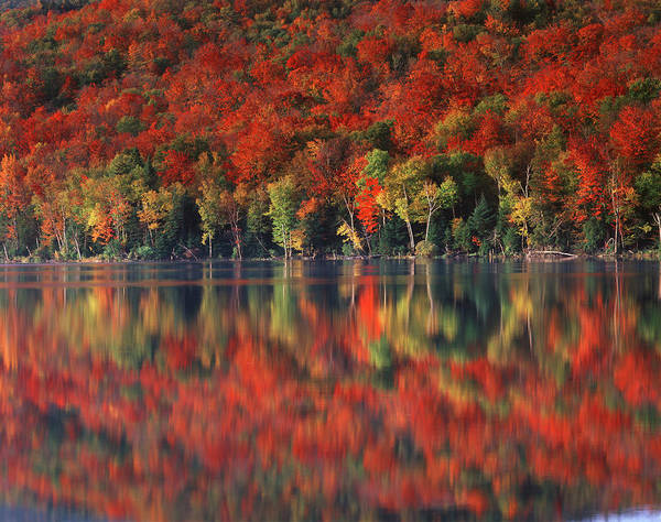 Acer Saccharum Photograph - New York, Adirondack Mountains by Christopher Talbot Frank