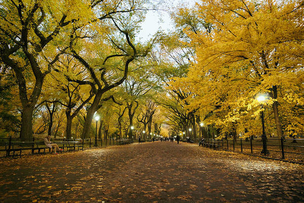 Elm Tree Photograph - New York City - Autumn - Central Park - Literary Walk by Vivienne Gucwa