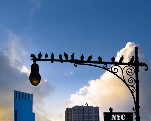 Photograph - New York City Is For The Birds by Mark E Tisdale