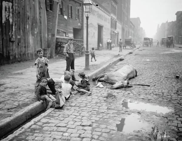 Photograph - New York Dead Horse by Granger