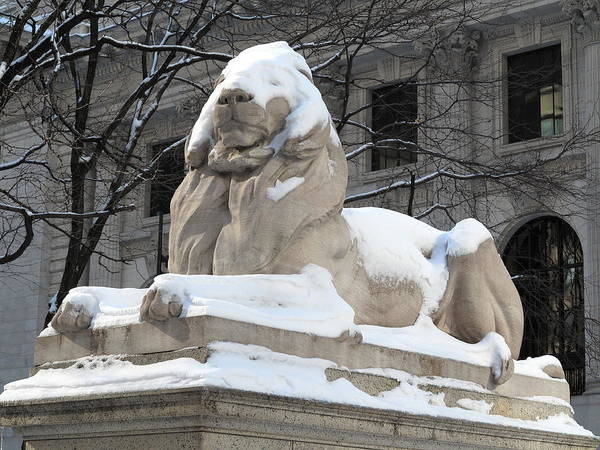 Photograph - New York Public Library Lion by Frank Romeo