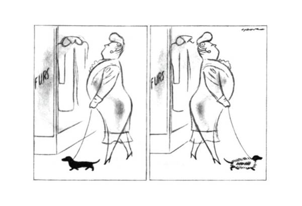 Pet Store Drawing - New Yorker April 12th, 1941 by Leonard Dove
