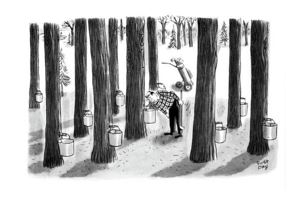 Maple Drawing - New Yorker April 7th, 1962 by Robert J. Day