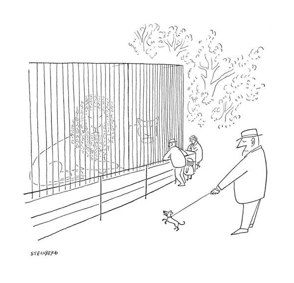 Zoo Animals Drawing - New Yorker July 22nd, 1950 by Saul Steinberg